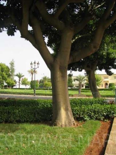 Maroko-2012-213