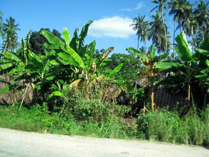 Zanzibar-2012-24